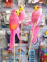 Топпер Попугай розовый